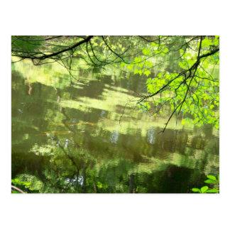 Walden Pond I Postcard
