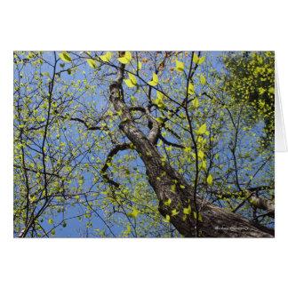 Walden Pond: Imagination Card