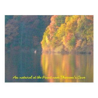 Walden Pond post card