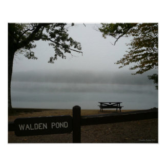 Walden Pond  Poster - Contemplative Mist