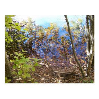 Walden Pond Reflects Postcard