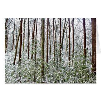 Walden Pond: Silence--Universal Refuge Card