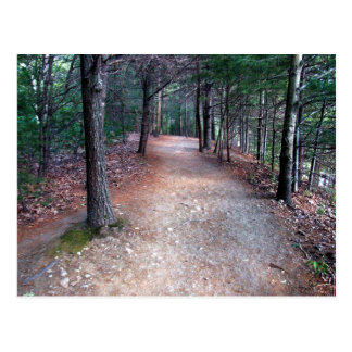 Walden Pond Trail Postcard