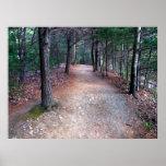 Walden Pond Trail Print