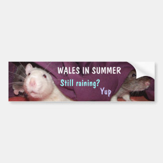 Wales in Summer bumper sticker
