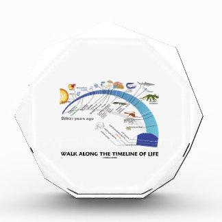 Walk Along The Timeline Of Life Biology Evolution Awards
