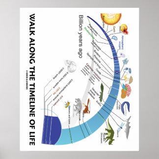 Walk Along The Timeline Of Life Biology Evolution Print