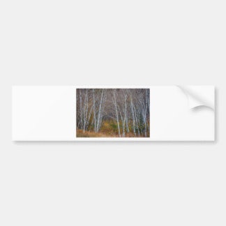 Walk In The Woods Bumper Sticker