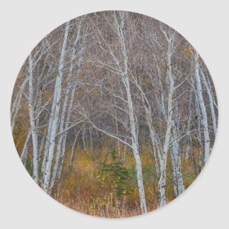Walk In The Woods Classic Round Sticker