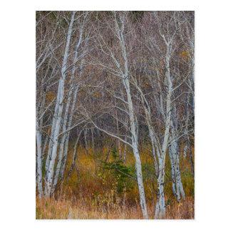 Walk In The Woods Postcard
