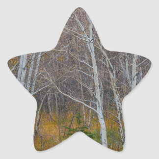 Walk In The Woods Star Sticker