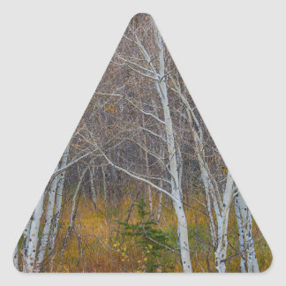 Walk In The Woods Triangle Sticker