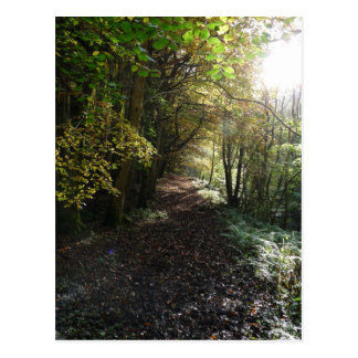 """Walk on a Woodland Path"" Northumberland Postcard"