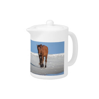 Walk on the Beach with a Wild Horse