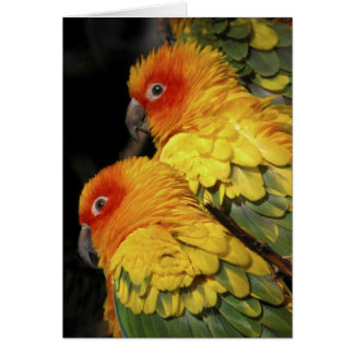 Walk on the Wild Side - Pair of Parrots Card