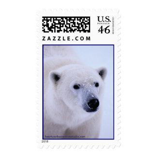 Walk on the Wild Side - Polar Bear Postage