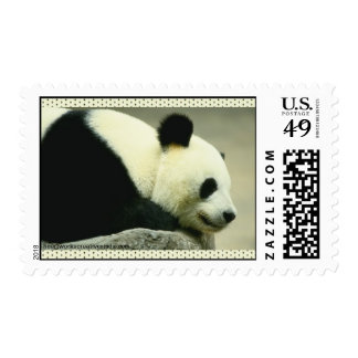 Walk on the Wild Side Stamp
