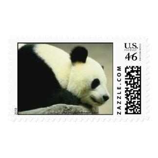 Walk on the Wild Side Postage Stamp