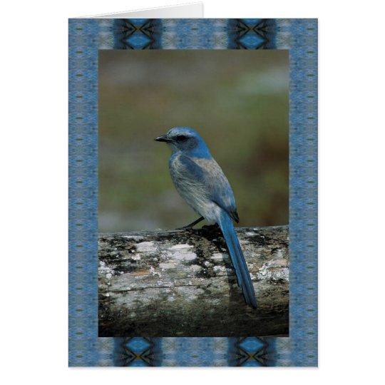 Walk on the Wild Side - Scrub Jay Card
