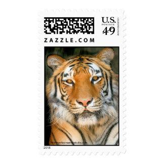 Walk on the Wild Side Tiger Postage Stamp