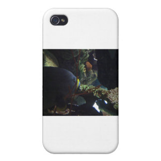 Walk Softly and Carry a Big Fish iPhone 4 Covers