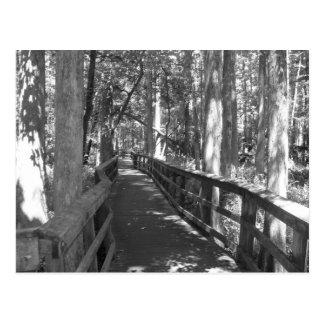 Walk to Remember Postcard