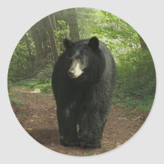 Walking Black Bear & Forest Trail Classic Round Sticker