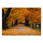 Walking Down Autumn's Memory Lane Card