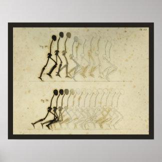 Walking Gait Analysis Leg Spine Chiropractic Chart