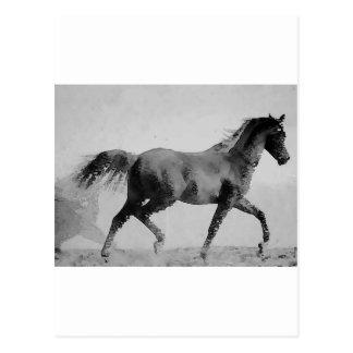 Walking Horse Black & White Postcard