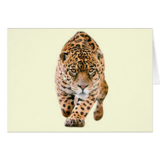 Walking Jaguar Eyes Card