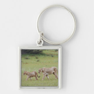 walking lioness with cubs, lion, Panthera leo, Keychain