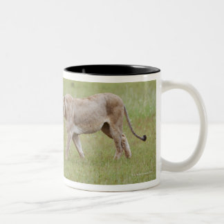 walking lioness with cubs, lion, Panthera leo, Two-Tone Coffee Mug