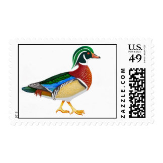 Walking Male Wood Duck Stamps