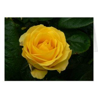 Walking On Sunshine Rose Card