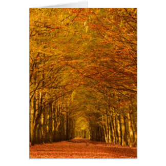 Walking path in forest in autumn vertical card