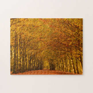 Walking path through the forest in autumn jigsaw puzzle