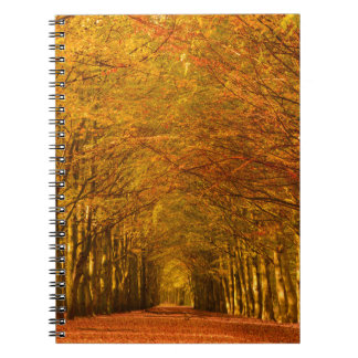 Walking path through the forest in autumn notebook