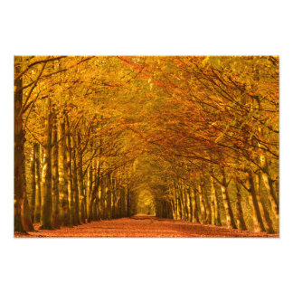Walking path through the forest in autumn photo print