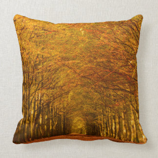 Walking path through the forest in autumn pillow