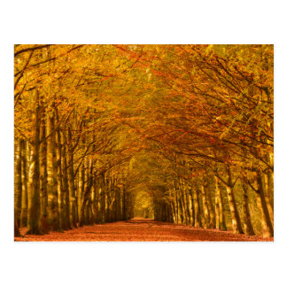 Walking path through the forest in autumn postcard