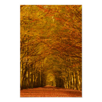 Walking path through the forest in autumn poster
