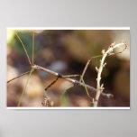 Walking Stick Bug Poster