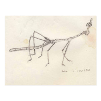 Walking Stick Insect Postcard