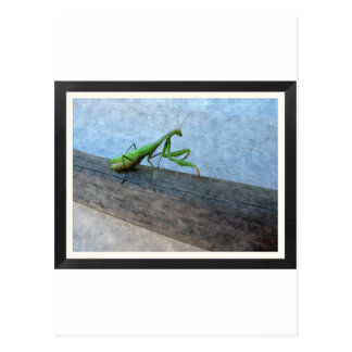 Walking Stick Postcard
