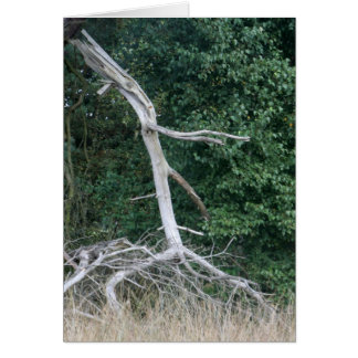 walking tree card