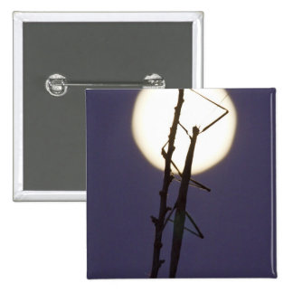 walkingstick and full moon in south Texas, USA Pin