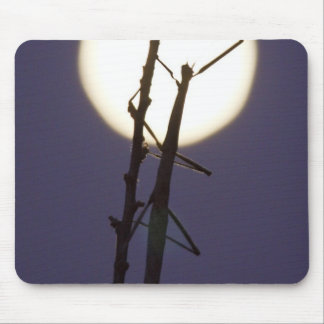 walkingstick and full moon in south Texas, USA Mouse Pad