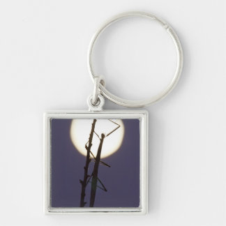walkingstick and full moon in south Texas, USA Silver-Colored Square Keychain