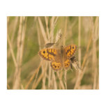 Wall Brown Butterfly Wood Print